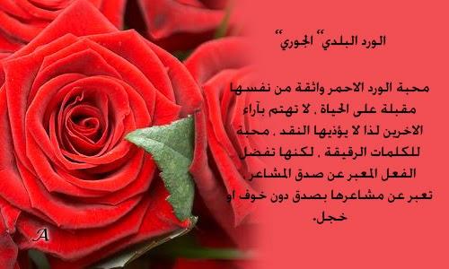 بالصور عبارات عن الورد , بالصور اجمل عبارات عن الورد 175 2