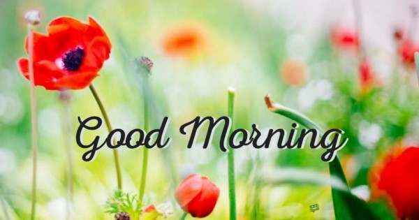 بالصور صور عن الصباح , احلى صور عن الصباح 184 9