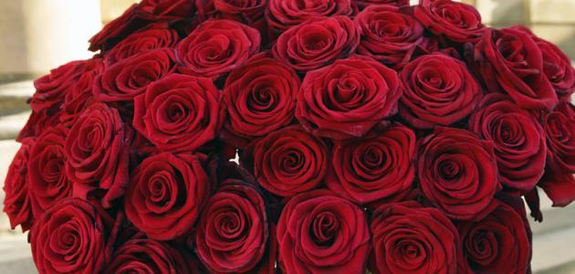 صور شعر عن الورد , اجمل كلمات الشعر عن الورد