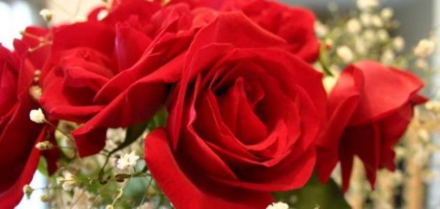 بالصور شعر عن الورد , اجمل كلمات الشعر عن الورد 192