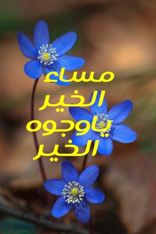 بالصور بطاقات مساء الخير , بالصور اجمل عبارات وبطاقات مساء الخير 198 11