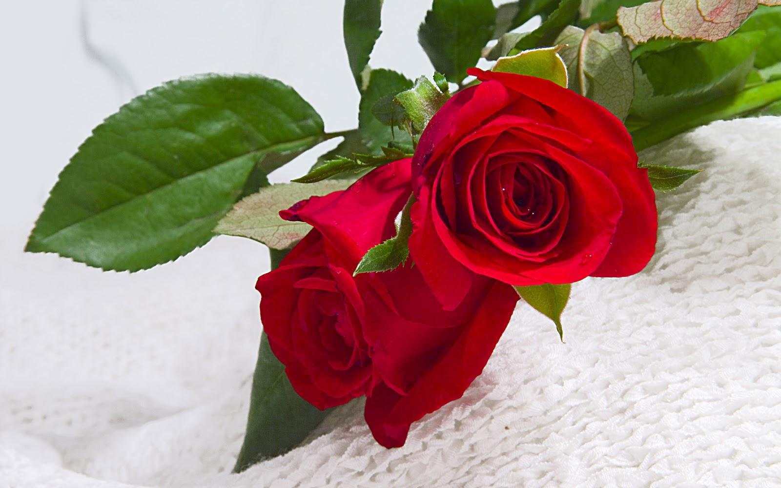 بالصور صور ورد حب , اجمل صور لورد حب جميل ورومانسى 215 3