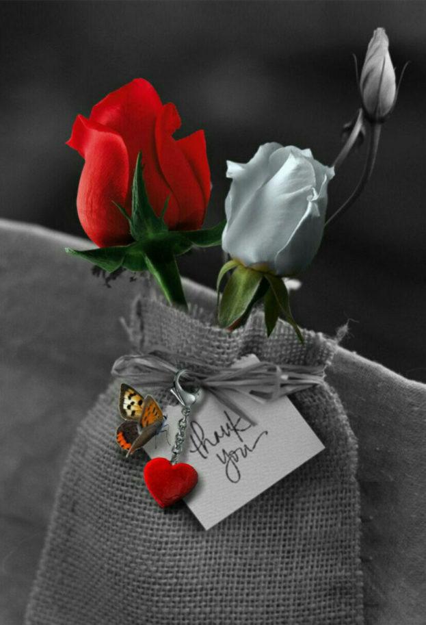بالصور صور ورد حب , اجمل صور لورد حب جميل ورومانسى 215 5