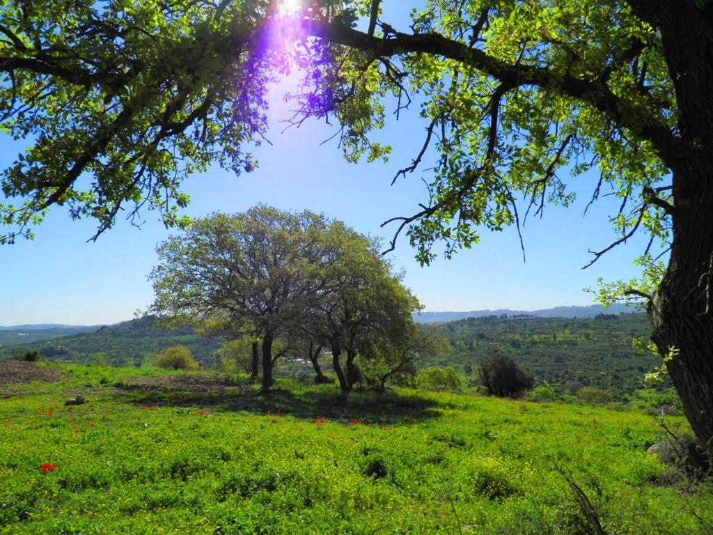 بالصور اجمل صور الطبيعة , اجمل صور الطبيعه الساحره 220 17