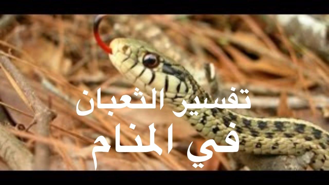 صورة تفسير رؤية الثعبان في المنام , شاهد بالفيديو على شكل تاتى الاعداء فى المنام 1952 2