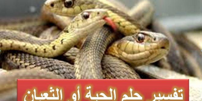 صوره تفسير رؤية الثعبان في المنام , شاهد بالفيديو على شكل تاتى الاعداء فى المنام