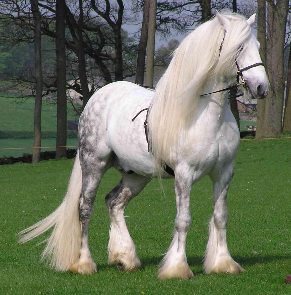 بالصور اجمل خيول في العالم , شاهد بالصور اجود انواع الخيول 2042 13