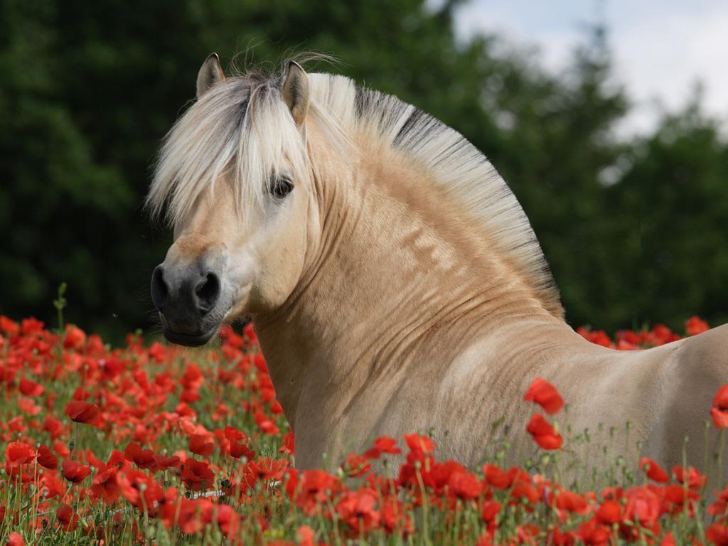 بالصور اجمل خيول في العالم , شاهد بالصور اجود انواع الخيول 2042 14