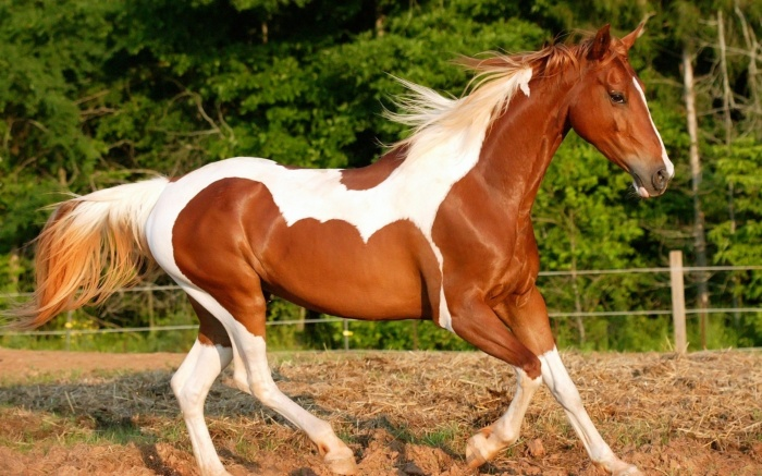 بالصور اجمل خيول في العالم , شاهد بالصور اجود انواع الخيول 2042 6