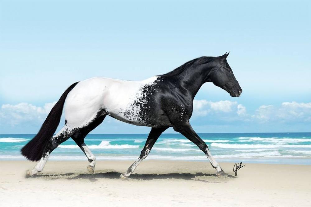 بالصور اجمل خيول في العالم , شاهد بالصور اجود انواع الخيول 2042 8