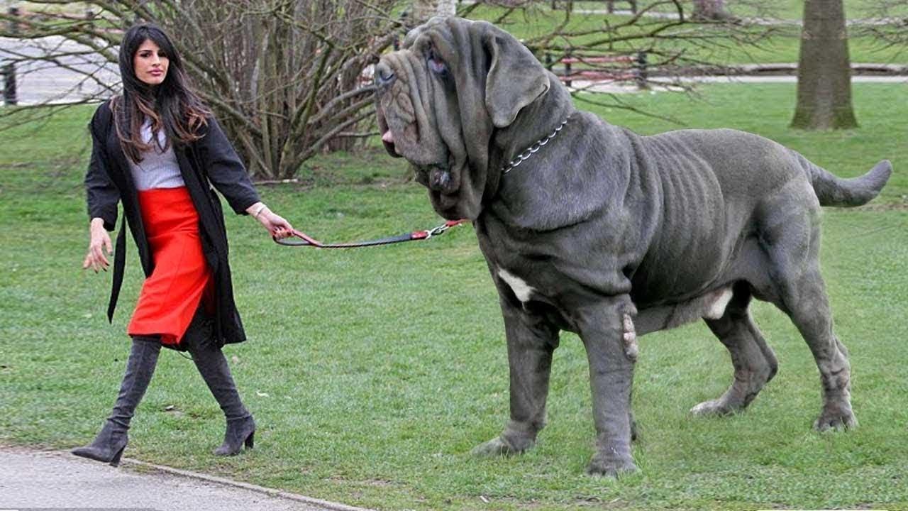 صورة اشرس انواع الكلاب , شاهد بالصور اخطر الكلاب الفتاكة
