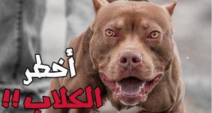 اشرس انواع الكلاب , شاهد بالصور اخطر الكلاب الفتاكة