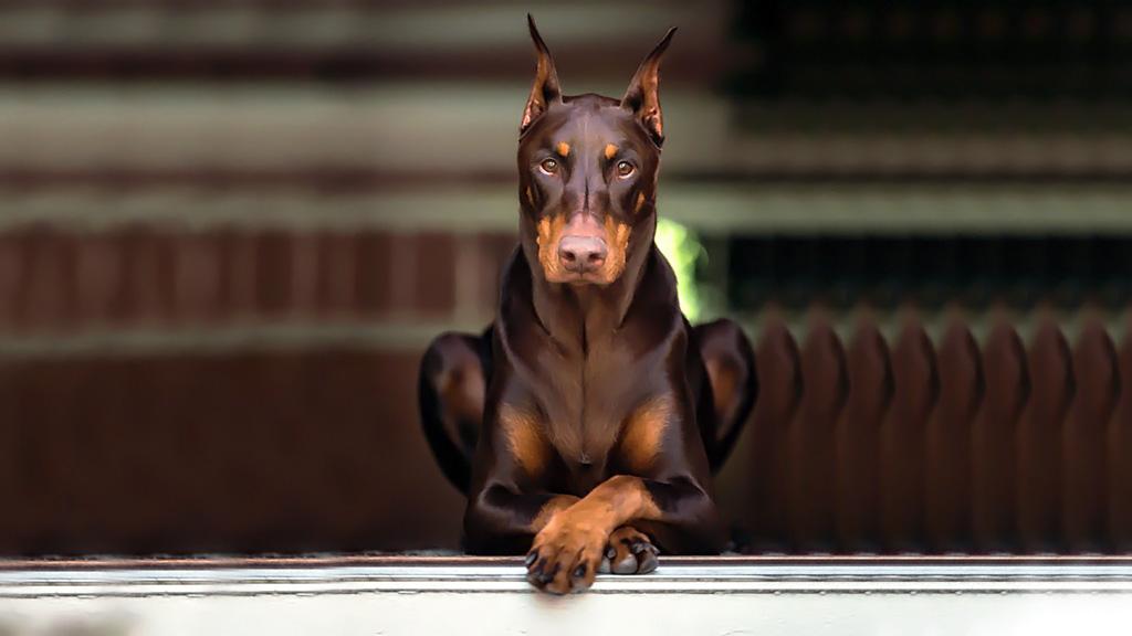 بالصور اشرس انواع الكلاب , شاهد بالصور اخطر الكلاب الفتاكة 2048 8