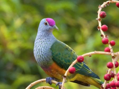 صوره صور طيور , اجمل صور للطيور