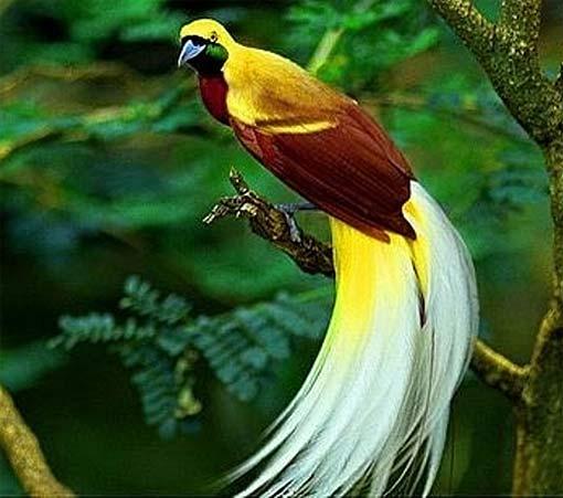بالصور صور طيور , اجمل صور للطيور 394 10