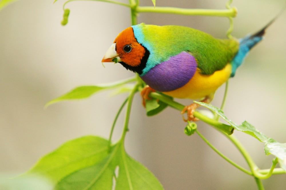 بالصور صور طيور , اجمل صور للطيور 394 11