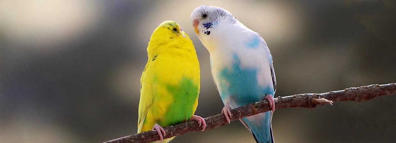 بالصور صور طيور , اجمل صور للطيور 394 12