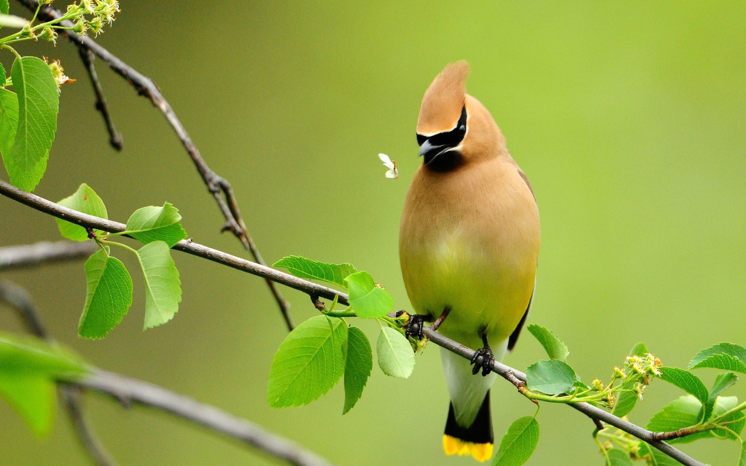 بالصور صور طيور , اجمل صور للطيور 394 13