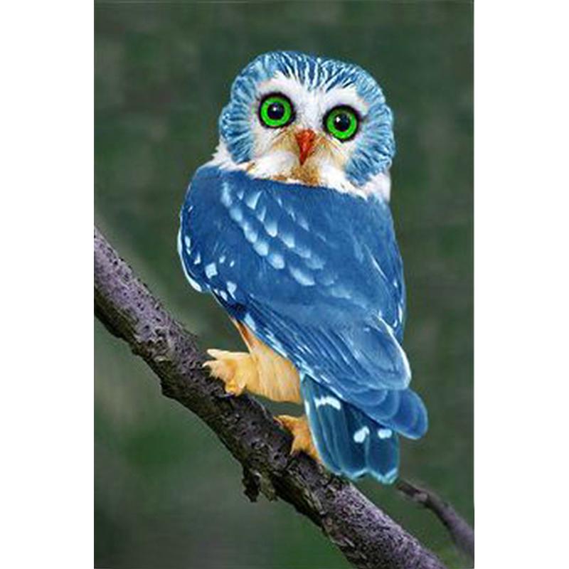 بالصور صور طيور , اجمل صور للطيور 394 14