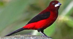 صور طيور , اجمل صور للطيور