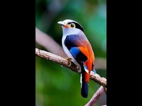بالصور صور طيور , اجمل صور للطيور 394 3