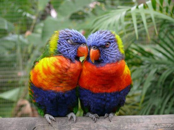 بالصور صور طيور , اجمل صور للطيور 394 4