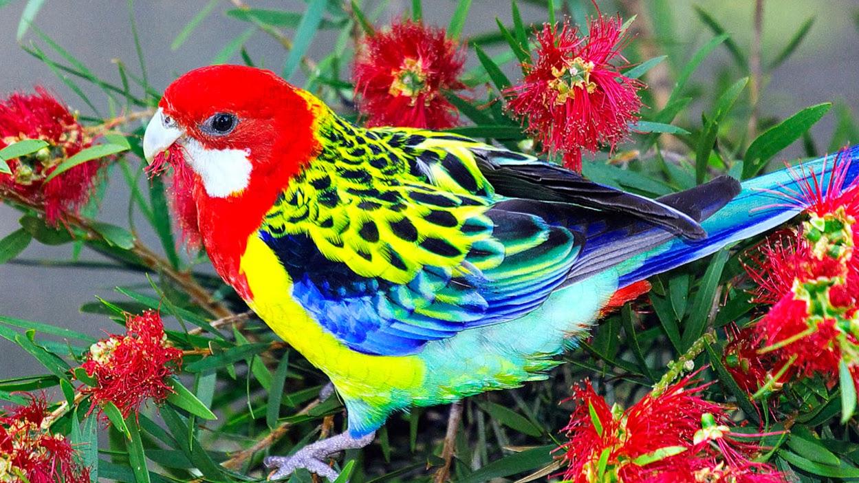 بالصور صور طيور , اجمل صور للطيور 394 5
