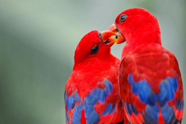 بالصور صور طيور , اجمل صور للطيور 394 7