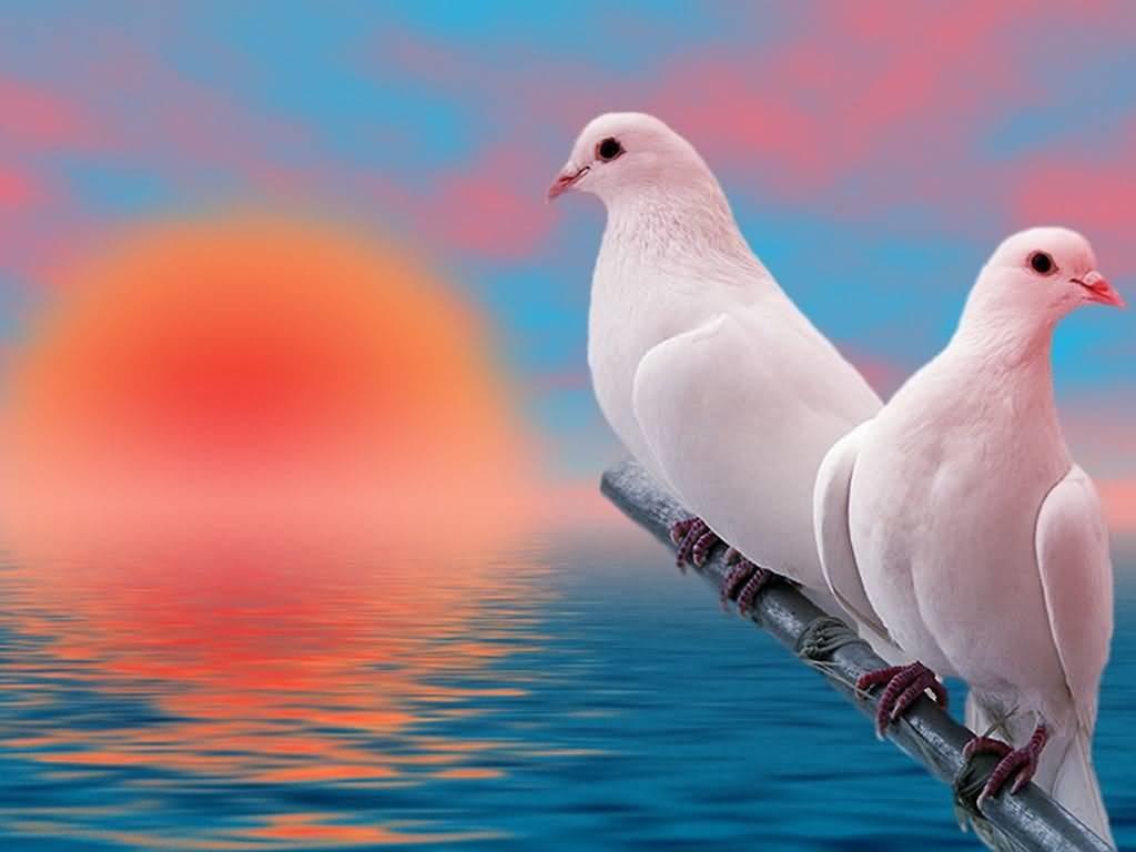 بالصور صور طيور , اجمل صور للطيور 394 8