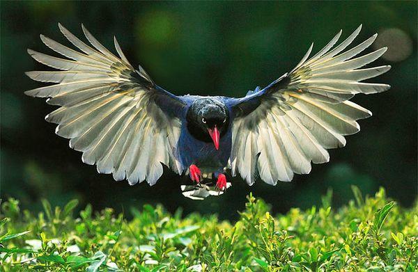 بالصور صور طيور , اجمل صور للطيور 394 9