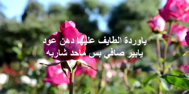 صورة كلمات من ورود , شاهد اجمل كلمات وردية ورومانسية