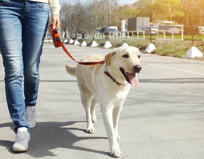 صوره كيفية تدريب الكلاب , الاسلوب الصحيح لتربيه الكلاب