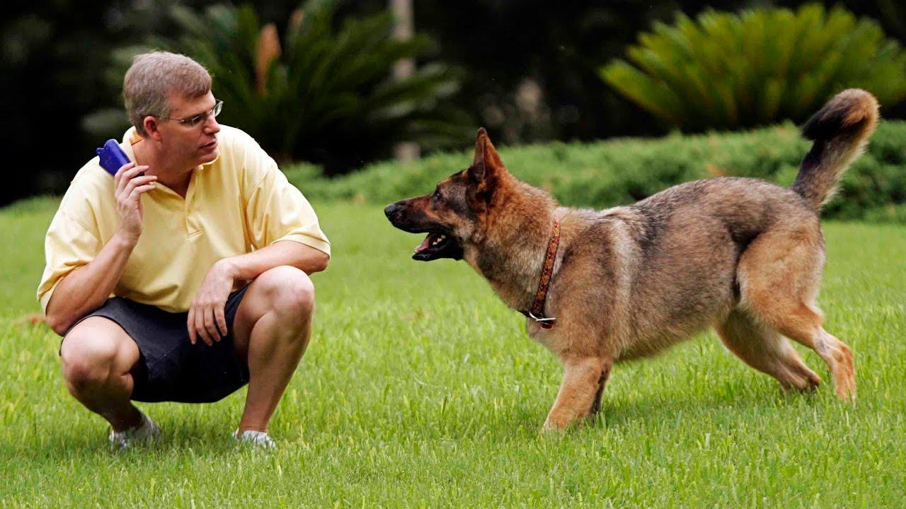بالصور كيفية تدريب الكلاب , الاسلوب الصحيح لتربيه الكلاب 45 2