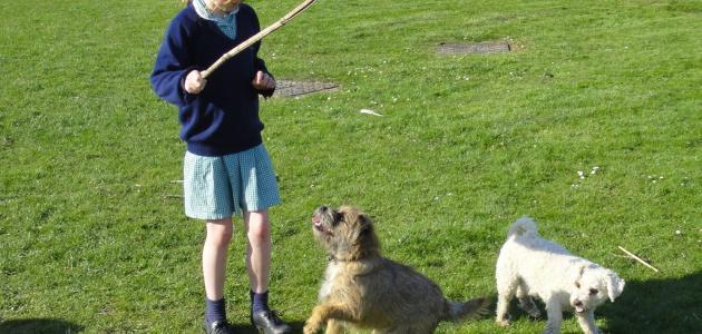 بالصور كيفية تدريب الكلاب , الاسلوب الصحيح لتربيه الكلاب 45 3