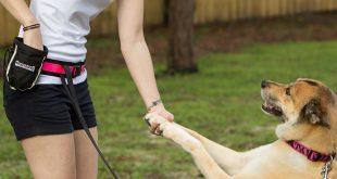 بالصور كيفية تدريب الكلاب , الاسلوب الصحيح لتربيه الكلاب 45 4 310x165