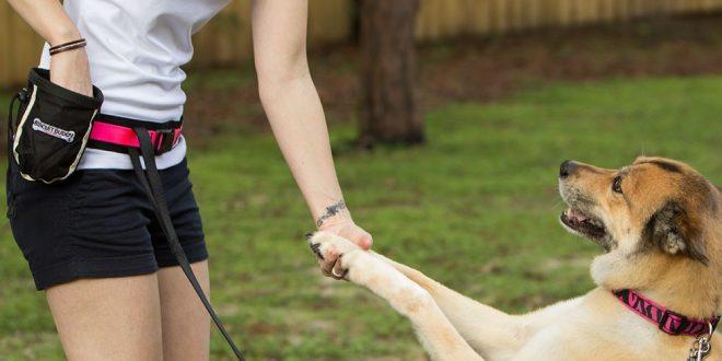 صور كيفية تدريب الكلاب , الاسلوب الصحيح لتربيه الكلاب