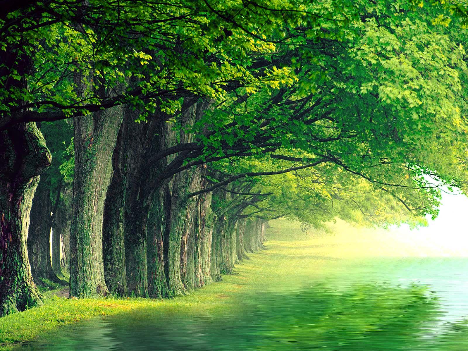 بالصور جمال الطبيعة , شاهد بالصور ابداع الخالق فى جمال الطبيعة 454 11