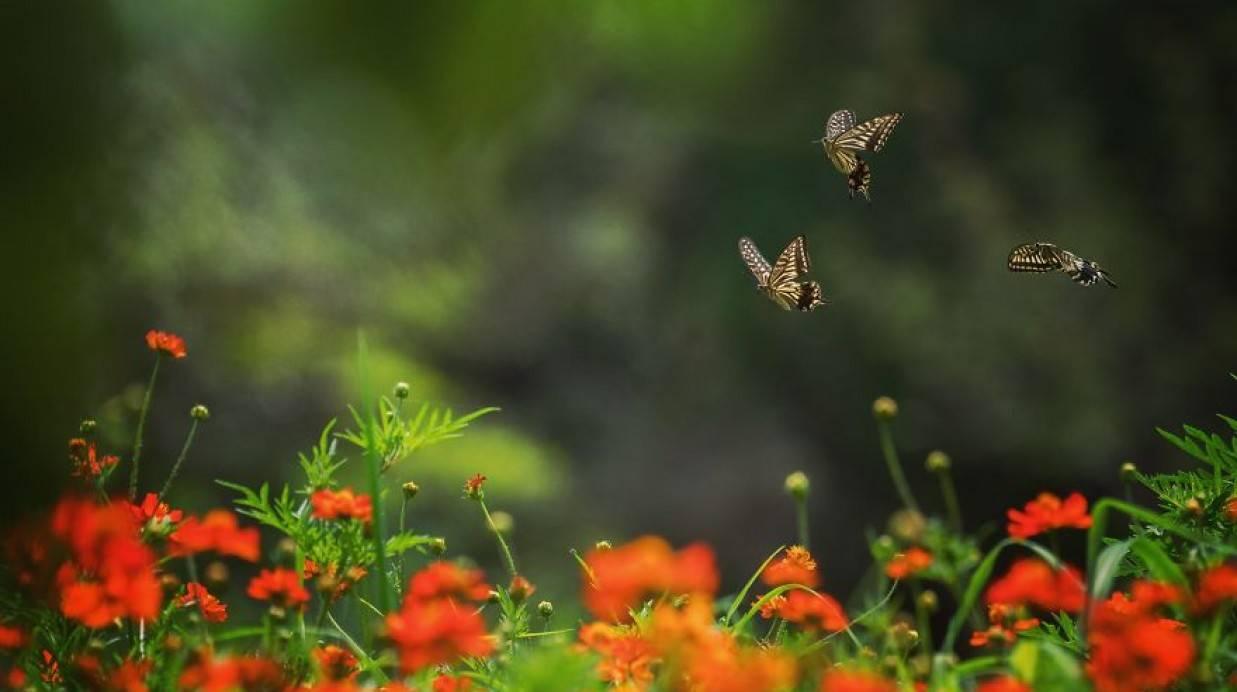 بالصور جمال الطبيعة , شاهد بالصور ابداع الخالق فى جمال الطبيعة 454 4