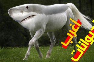 صورة عجائب الحيوانات , اغرب الحيوانات اللى ممكن تشوفها فى حياتك