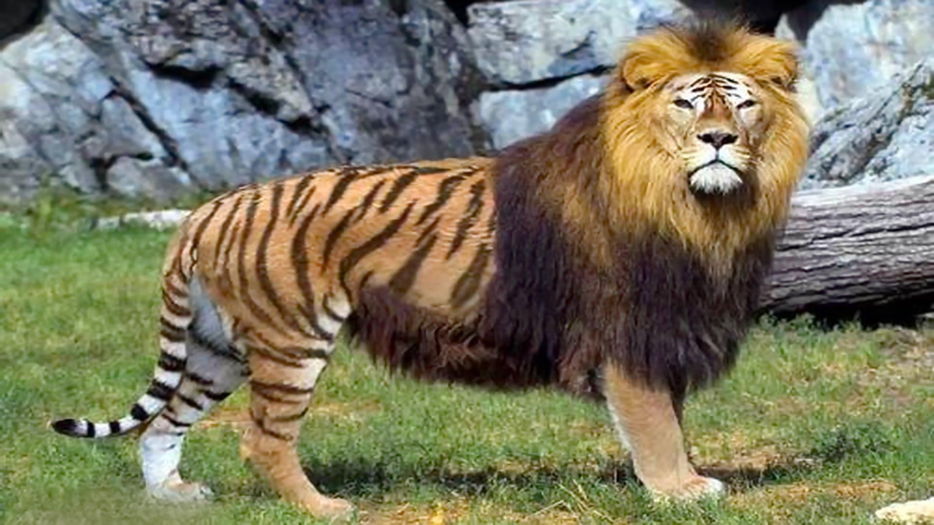 بالصور عجائب الحيوانات , اغرب الحيوانات اللى ممكن تشوفها فى حياتك 476 3