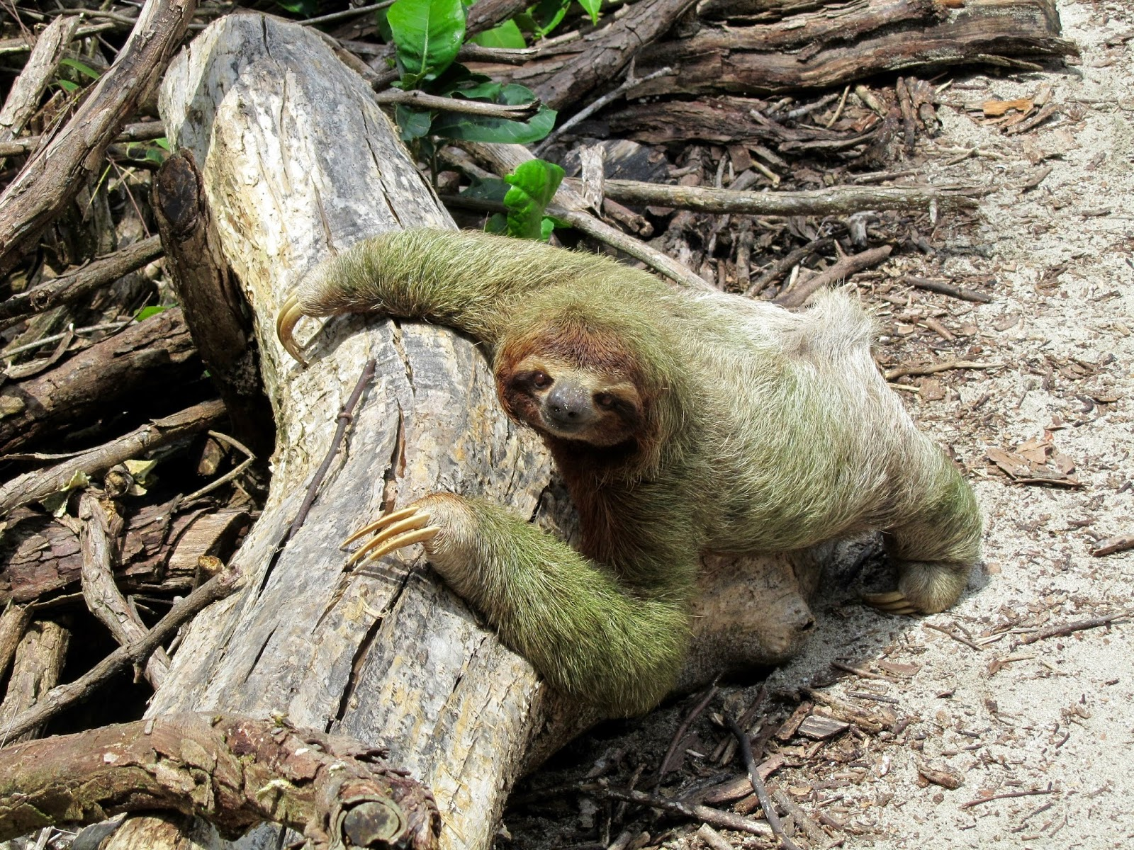 بالصور عجائب الحيوانات , اغرب الحيوانات اللى ممكن تشوفها فى حياتك 476 4