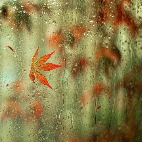 بالصور صور فصل الشتاء , اجمل صور للمطر و الطبيعه في الشتاء 1653 10