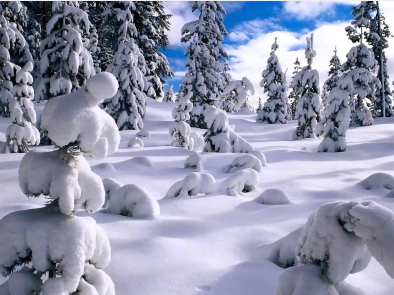بالصور صور فصل الشتاء , اجمل صور للمطر و الطبيعه في الشتاء 1653 8