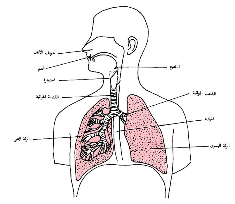 بالصور جسم الانسان بالصور , تعرف بالصور على ما يحتوية جسم الانسان 1771 1