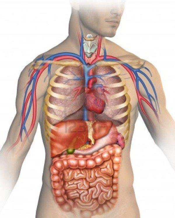 بالصور جسم الانسان بالصور , تعرف بالصور على ما يحتوية جسم الانسان 1771 14