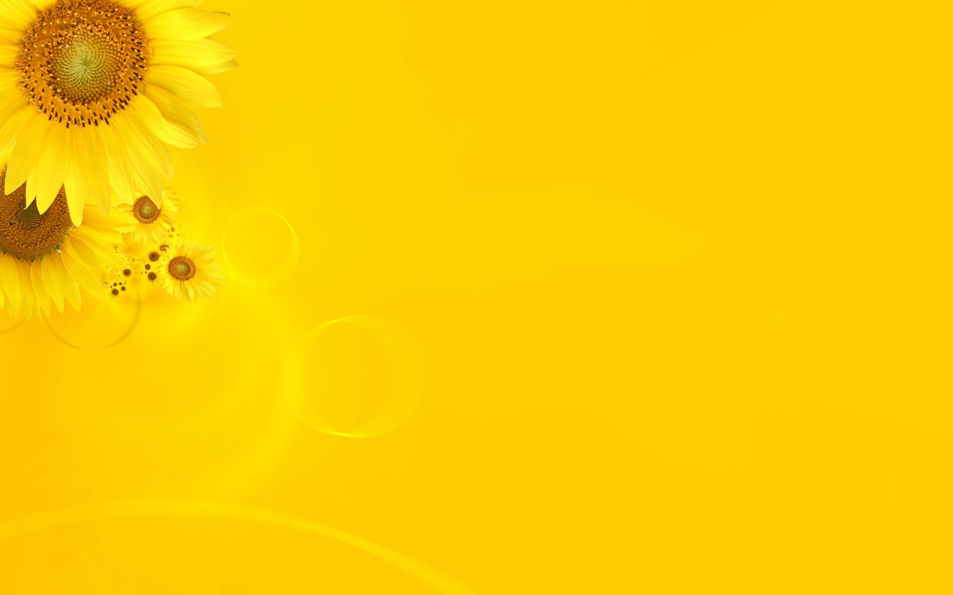 بالصور خلفية صفراء , الاصفر هو الافضل لخلفياتك 1818 7