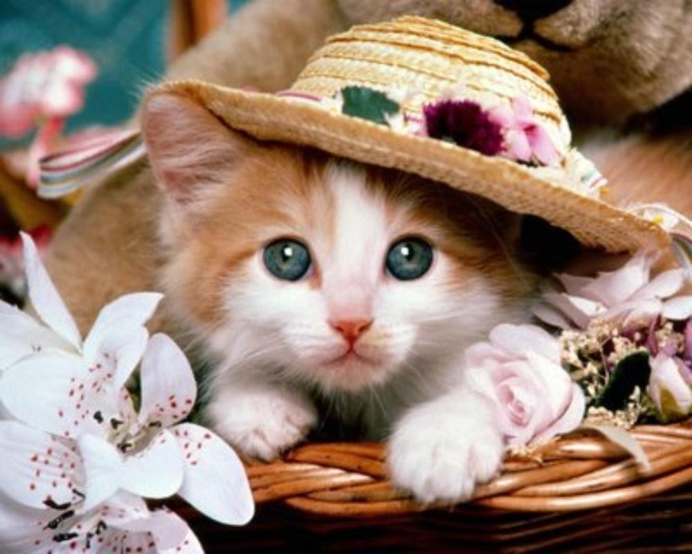 بالصور اجمل صور قطط , شاهد بالصور ارق انواع القطط 1867 12