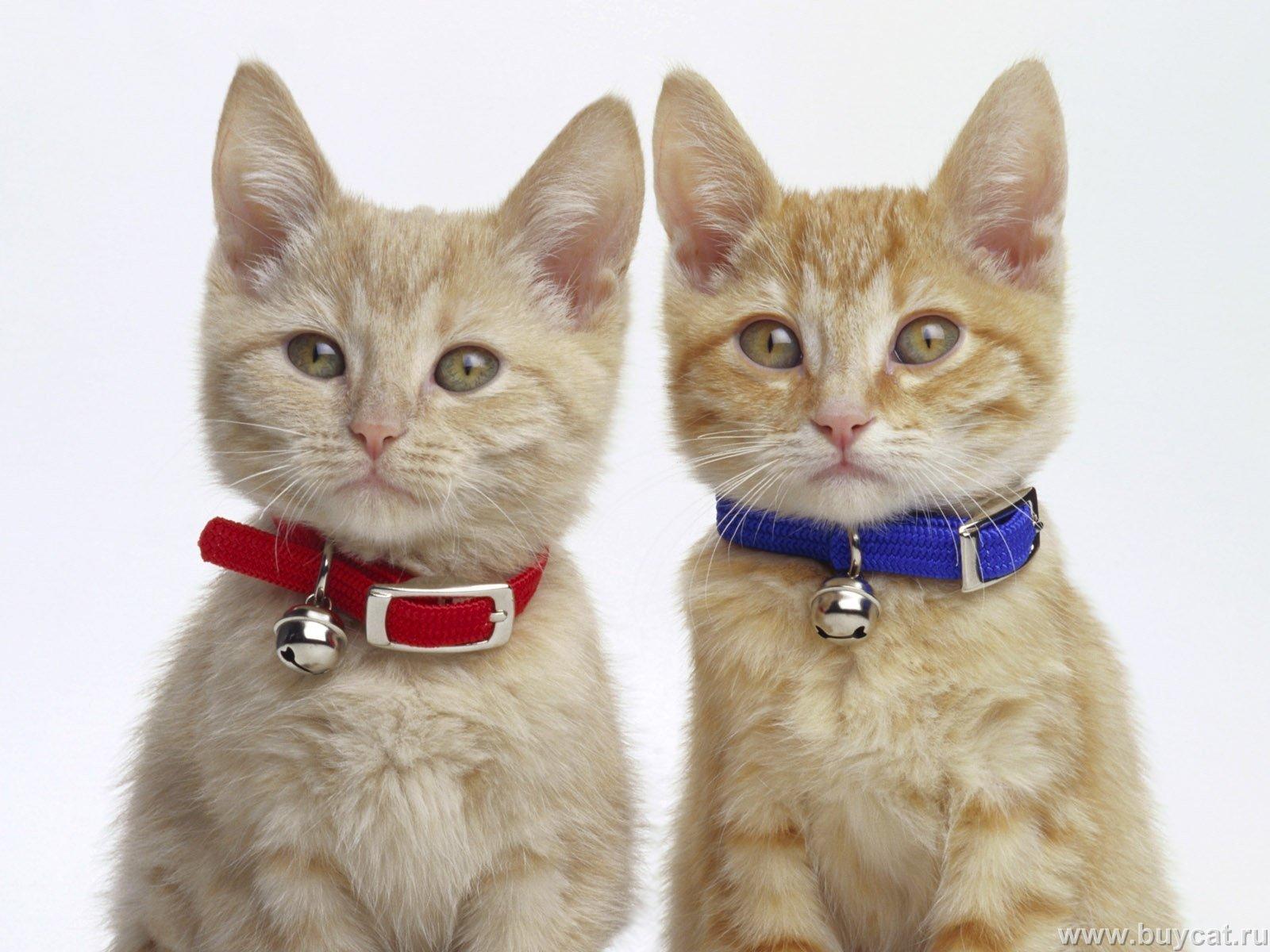 بالصور اجمل صور قطط , شاهد بالصور ارق انواع القطط 1867 14