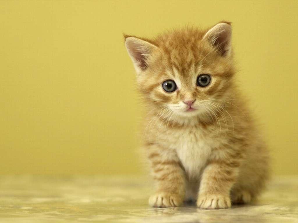 بالصور اجمل صور قطط , شاهد بالصور ارق انواع القطط 1867 2