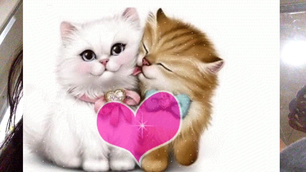 بالصور اجمل صور قطط , شاهد بالصور ارق انواع القطط 1867 6